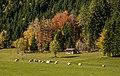 Ferlach Bodental Bodenbauer Weide und Wald 16102013 08983.jpg