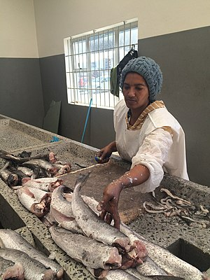 Debt bondage - A worker preparing fish caught off the coast of South Africa