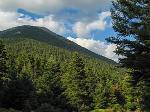 Mainalo - Fir forest on Mt. Mainalo