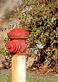 Fire Hydrant in the Sun (34711540386).jpg
