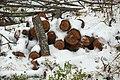 Firewood in Russia. img 09.jpg