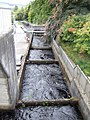 Fish ladder at Pitlochry dam - geograph.org.uk - 658468.jpg