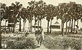 Five years in the Sudan (1911) (14780371802).jpg