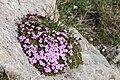 Fjällglim-4801 - Flickr - Ragnhild & Neil Crawford.jpg