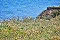 Flamborough Head, East Yorkshire, UK, 08082015, jcw1967 (10) (32727285204).jpg