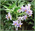 Flickr - ronsaunders47 - LOCAL VIEWS 059.jpg