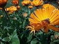 Flower20180321 105203.jpg