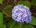 Flower 3582.jpg