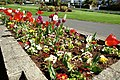 Flower bed, Whitehead - geograph.org.uk - 782445.jpg