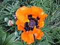 Flowers - Fiori (19409966745).jpg