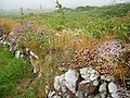 Flowers - geograph.org.uk - 268116.jpg