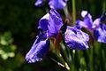 Flowers 035.jpg