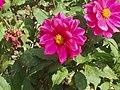 Flowers in Renai Nantou.jpg