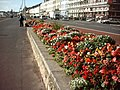 Flowers on the Front - geograph.org.uk - 794016.jpg