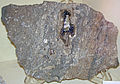 Fluorite and calcite in vug in Silurian dolostone (Auglaize Quarry, Junction, Ohio, USA) 1 (17142690567).jpg