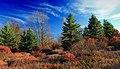 Foliage Walk (1) (30264081881).jpg