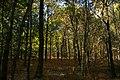 Forêt de Rambouillet — automne 2018 (4).jpg
