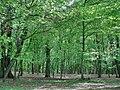 Forest in Târgu Mureș - panoramio - paulnasca (8).jpg