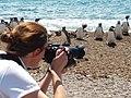 Fotografiando pingüinos.jpg