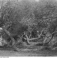 Fotothek df ps 0001141 Bäume.jpg