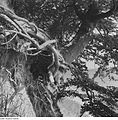 Fotothek df ps 0001841 Bäume.jpg