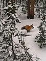 Fox (11983225834).jpg