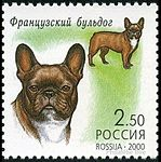 French-Builldog-Canis-lupus-familiaris.jpg