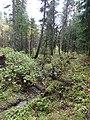 G. Tomsk, Tomskaya oblast', Russia - panoramio (5).jpg