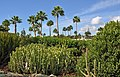 GC Maspalomas Cactus Park R01.jpg