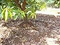 Garden bed (3).JPG
