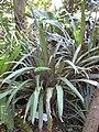 Gardenology.org-IMG 0678 rbgs10dec.jpg