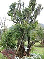 Gardenology.org-IMG 7322 qsbg11mar.jpg