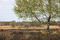 Gildehauser Venn - April Impression.jpg