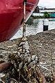 Gloucester Docks (27855304801).jpg