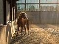 Glowing poney (Unsplash).jpg