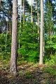 Gmina Kobylanka, Poland - panoramio (1).jpg