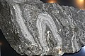 Gneiss (Henry County, Virginia, USA) (49155756208).jpg