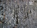 Gneiss (Proterozoic; Port Leyden, western Adirondacks, New York Sate, USA) 4 (39068567130).jpg