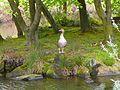 Goose at Ilkley Tarn (2480672143).jpg