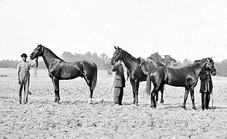Cincinnati (horse) - Photograph of three of Grant's horses during the Overland Campaign (Cold Harbor, Virginia), from left to right: Egypt, Cincinnati, and Jeff Davis