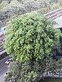 Green Line MRT Project Photographs by Peak Hora (12).jpg