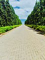 Green lane to heaven.jpg