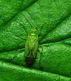 Green on green (9050106793).jpg