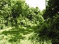 Greenary at Peddipalem village.jpg