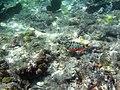 Grenada Under Water - panoramio.jpg