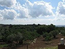 La terra dei monaci basiliani dell'abbazia: sullo sfondo, l'Agro Romano.
