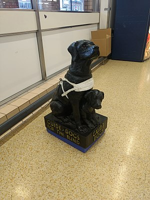 The Guide Dogs for the Blind Association - Collecting model, London, 2017.
