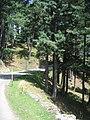 Gulmarg - Srinagar views 74.JPG