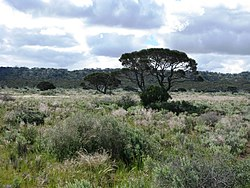 HAM Roe Plain 4 Madura pass Proposed NR IX-2010.JPG