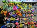 HK TST 尖沙咀 Haiphong Road Temporary Market 海防道臨時街市 Mar-2013 Fresh flowers stall.JPG